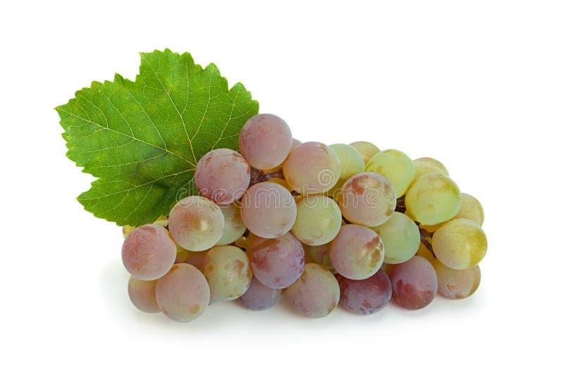 """Ягода крупного плана """"Лидия """"виноградины стоковое изображение rf"""