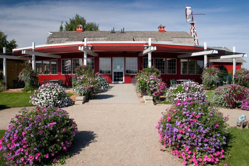 ягода saskatoon амбара стоковое фото