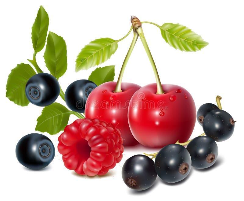 ягоды зрелые иллюстрация вектора