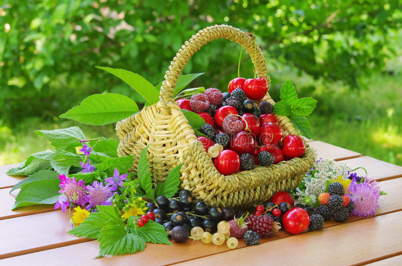 ягоды корзины стоковое изображение rf