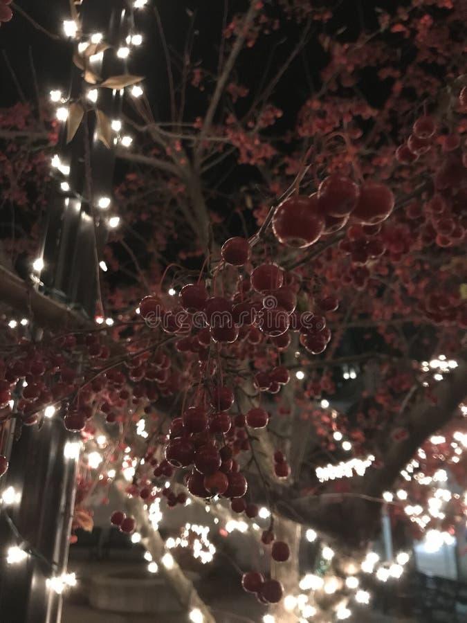 Ягоды на рождестве стоковые изображения rf