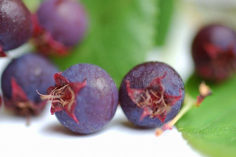 Download ягоды одичалые Стоковые Изображения RF - изображение: 17499