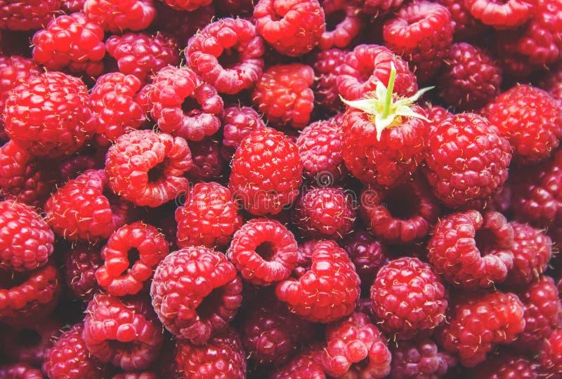 ягоды поленики дом Селективный фокус стоковые изображения