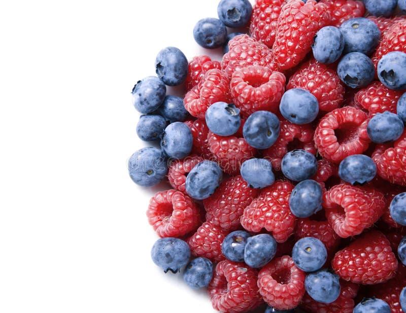 ягоды предпосылки закрывают над поднимающей вверх белизной стоковые фотографии rf