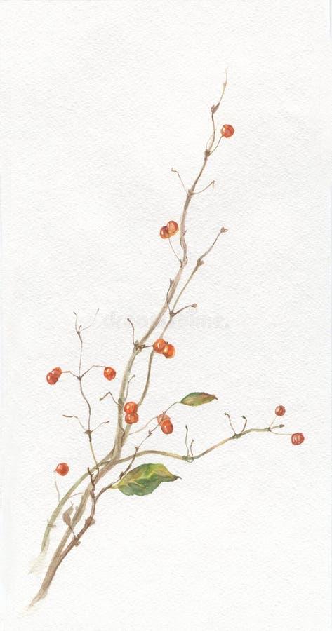 ягоды рисуя акварель каприфолия бесплатная иллюстрация