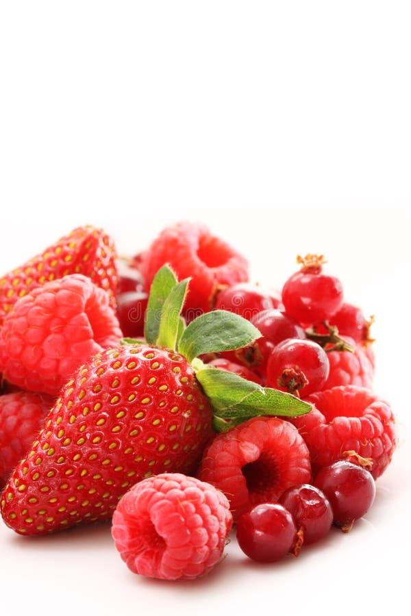 ягоды смешали стоковое изображение rf