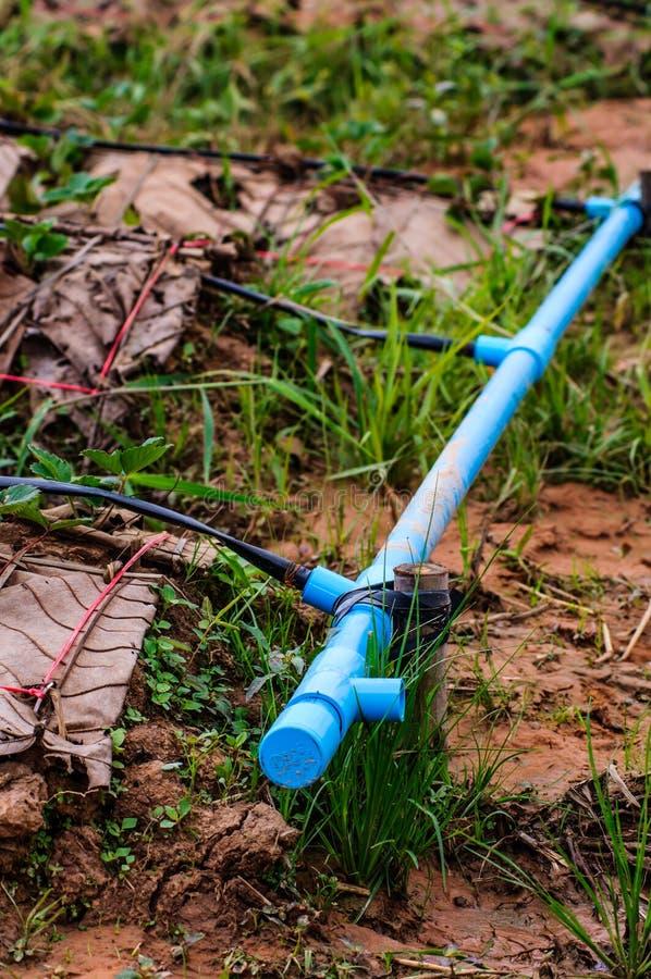 Ягоды клубник фермы сада поставки трубы водопровода в поле стоковое фото rf