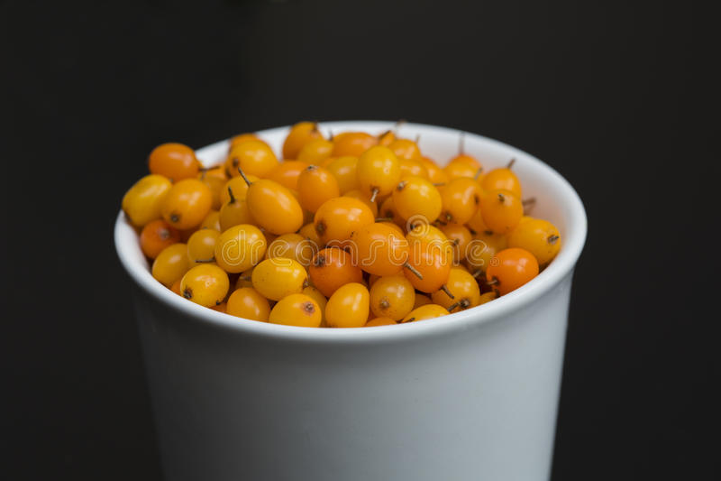 ягоды Мор-крушины в шаре стоковая фотография