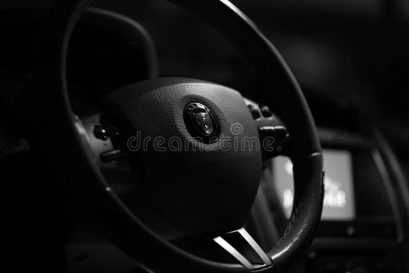 ягуар стоковая фотография rf