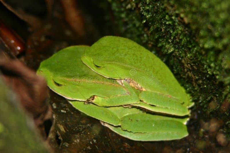 лягушки 2 стоковое фото