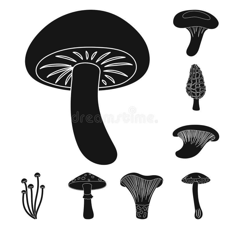Ядовитые и съестные значки черноты гриба в собрании комплекта для дизайна Разные виды запаса символа вектора грибов иллюстрация штока