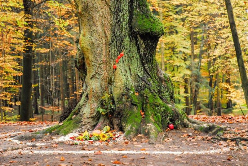 Языческие работы алтара и спирали снаружи рядом с деревом стоковое фото