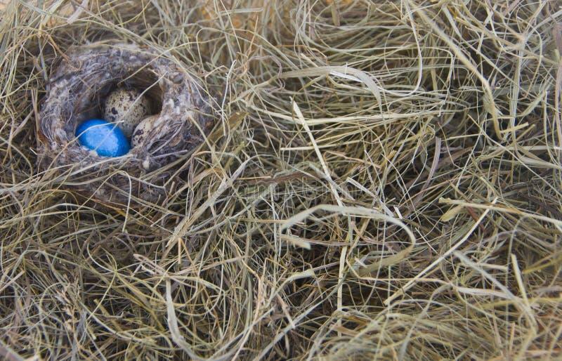 Яичка в гнезде на предпосылке сухой травы стоковое фото rf