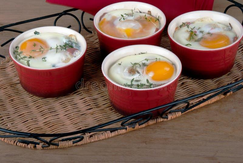 Яичка испекли с сметанообразными соусом, грибами, ветчиной, сыром и травами i стоковое изображение rf
