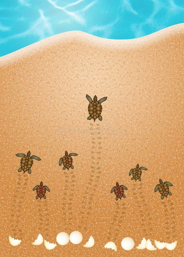 Яичка морской черепахи на пляже иллюстрация вектора
