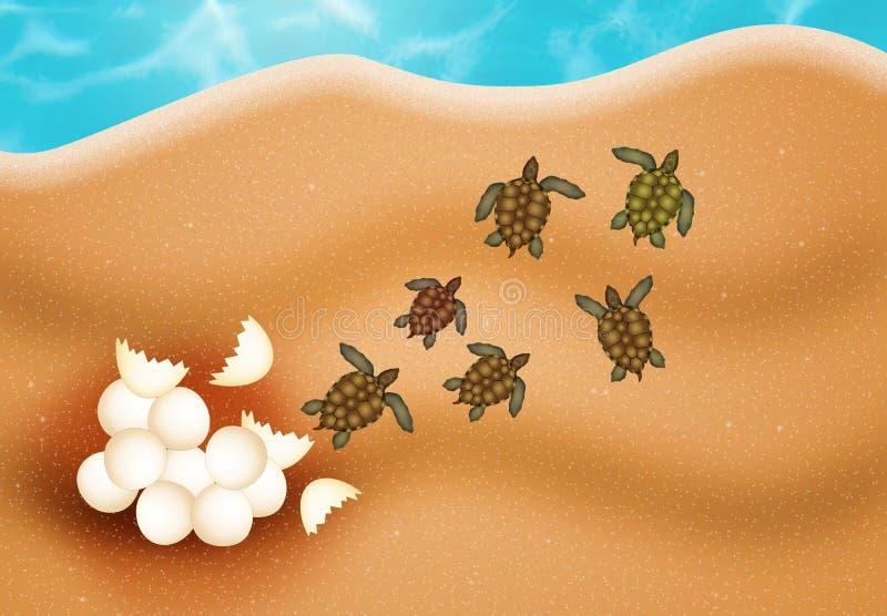 Яичка морской черепахи иллюстрация штока
