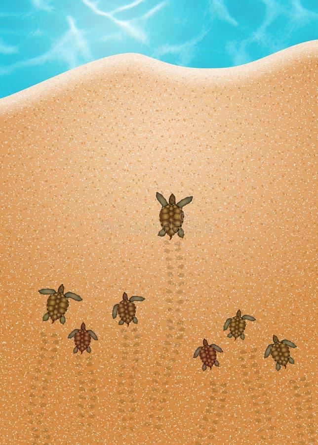 Яичка морской черепахи иллюстрация вектора