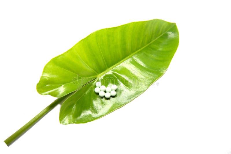 Яичка насекомого положенные на зеленые листья Яичка бабочки Яичка насекомого аранжированные в строках Красивые яичка насекомого стоковая фотография rf
