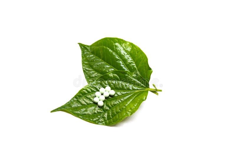 Яичка насекомого положенные на зеленые листья Яичка бабочки Яичка насекомого аранжированные в строках Красивые яичка насекомого стоковая фотография