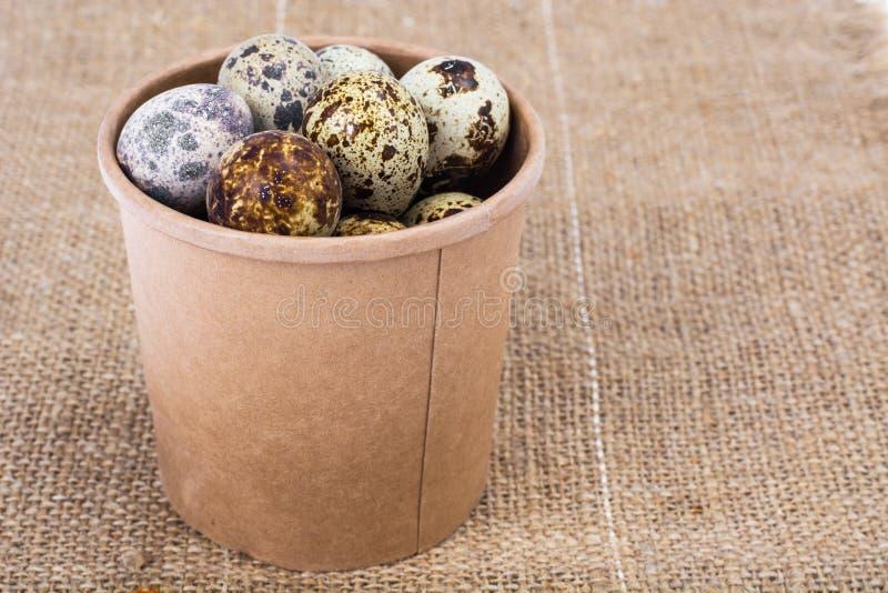 Яичка триперсток motley расцветка, концепция пасхи стоковые фотографии rf