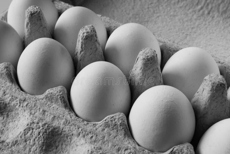 Яичка цыпленка в изображении картонной коробки черно-белом стоковые изображения rf