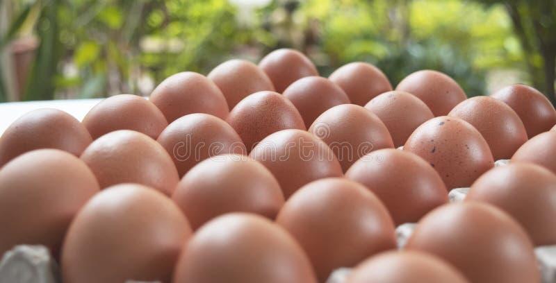 Яичка цыпленка на бумажной коробке, натуральных продуктов для каждого, который нужно есть ежедневно для здоровья стоковые изображения rf
