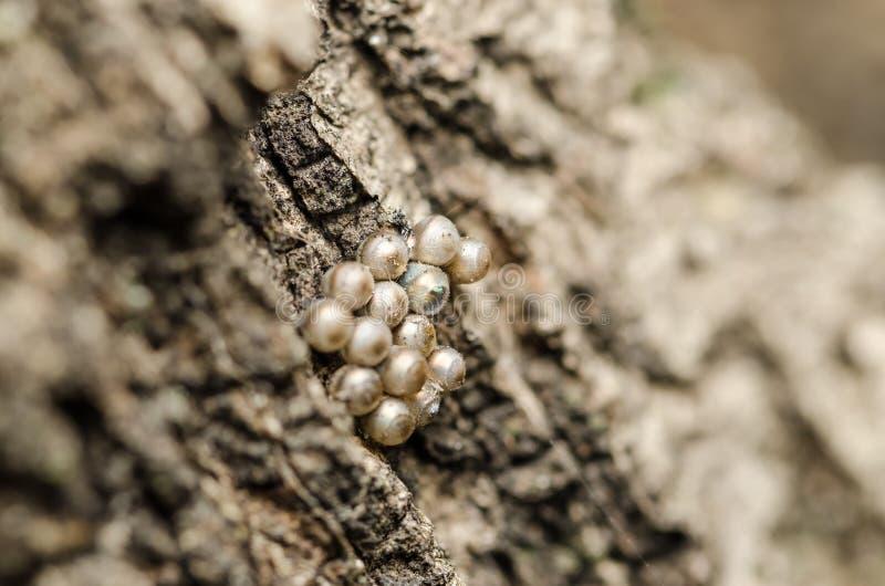 Яичко насиженное насекомым среди других Unhatched одних стоковое изображение rf