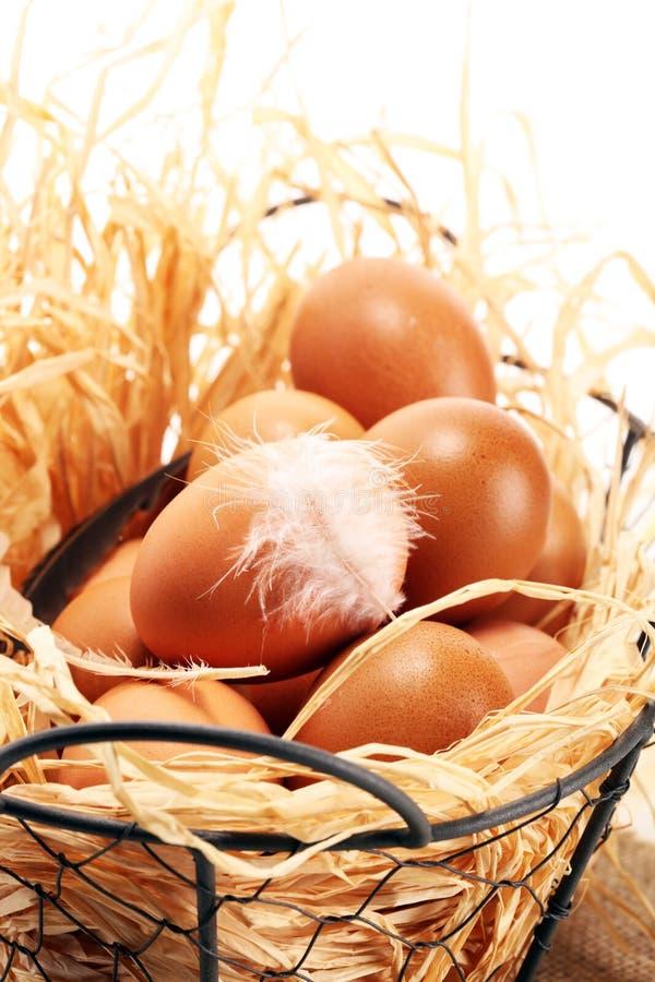 Яичко Свежие яйца фермы в корзине Пасхальное яйцо с концепцией пера стоковые фотографии rf