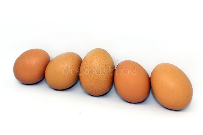 Яичко цыпленка изолированное на белой предпосылке стоковая фотография rf