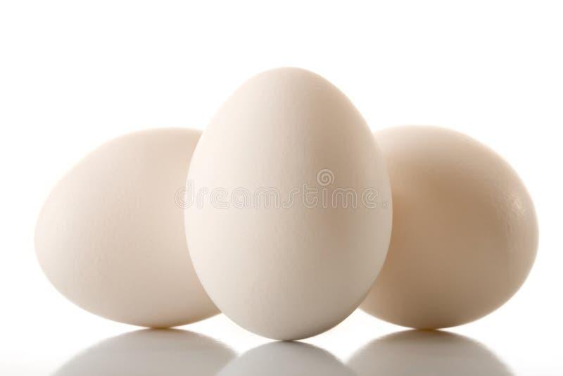яичко стоковая фотография