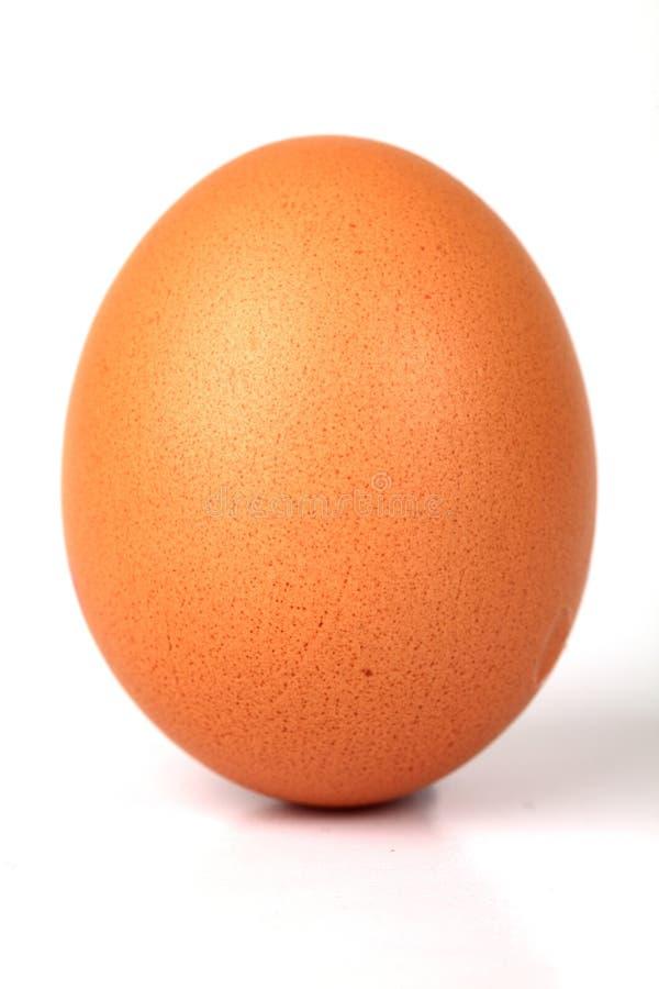 яичко стоковая фотография rf