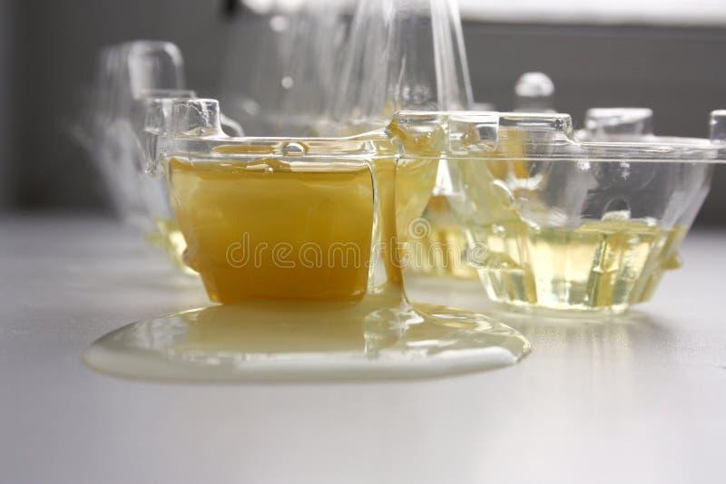 Яичный желток и белый протеин Удовлетворяет сырцовое стоковые изображения
