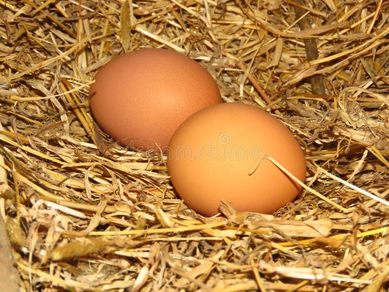 Яйца в естественных курицах соломы гнездятся органические яйца пасха счастливая стоковые фото