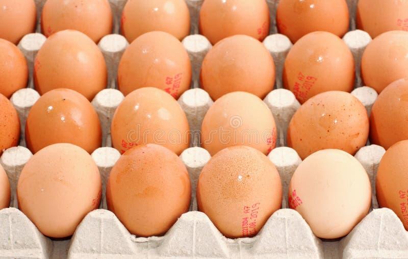 Яйца в кожухе картона стоковые изображения rf
