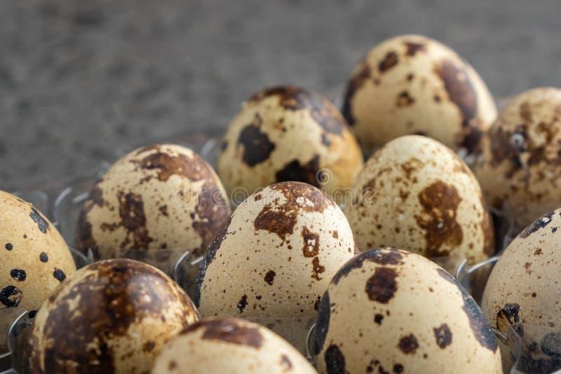 Яйца триперсток в пластиковой коробке, предпосылке яя триперсток стоковые фотографии rf