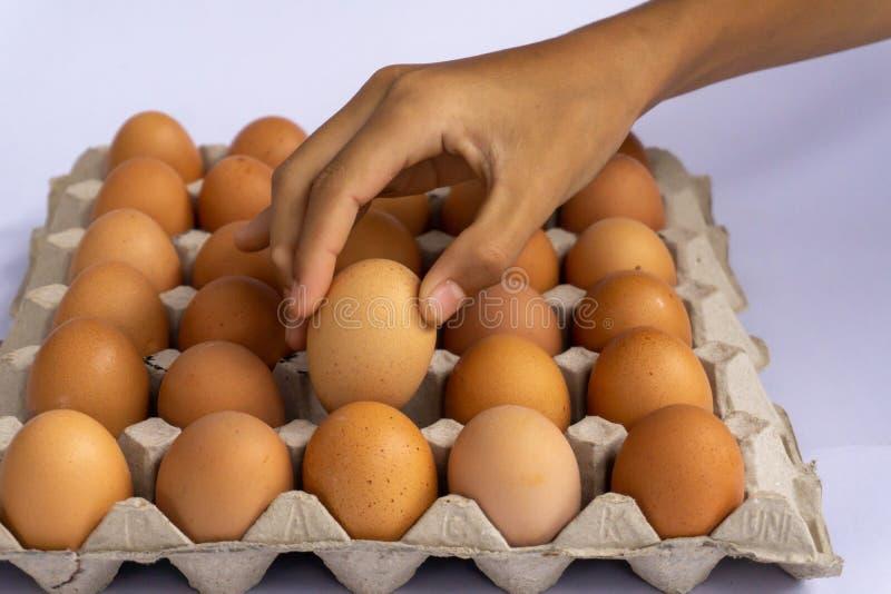 Яйца цыпленка свежи в пакете картона сделанном из повторно использованной макулатуры стоковая фотография rf