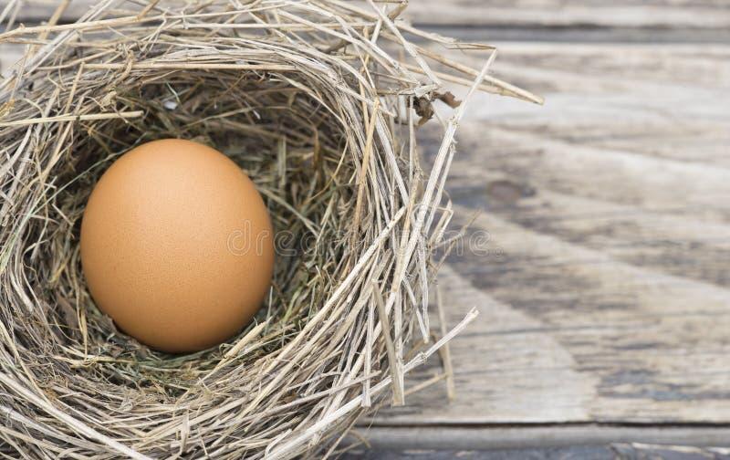 Яйцо Брауна в гнезде птицы, предпосылке пасхи стоковые фото