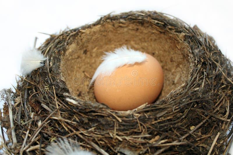 Яйцо внутри гнезда птицы стоковое изображение