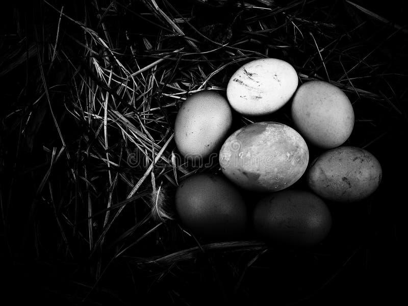 Яйцо на предпосылке соломы на черно-белом стоковые изображения rf