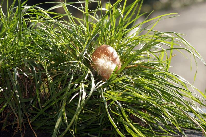 яйцо цыпленка Зелен-луга, свободный ряд стоковые фотографии rf