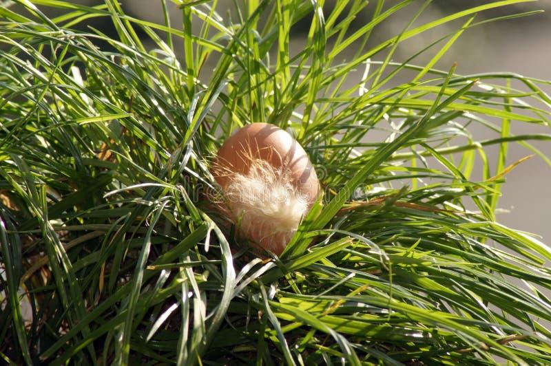 яйцо цыпленка Зелен-луга, свободный ряд стоковые изображения