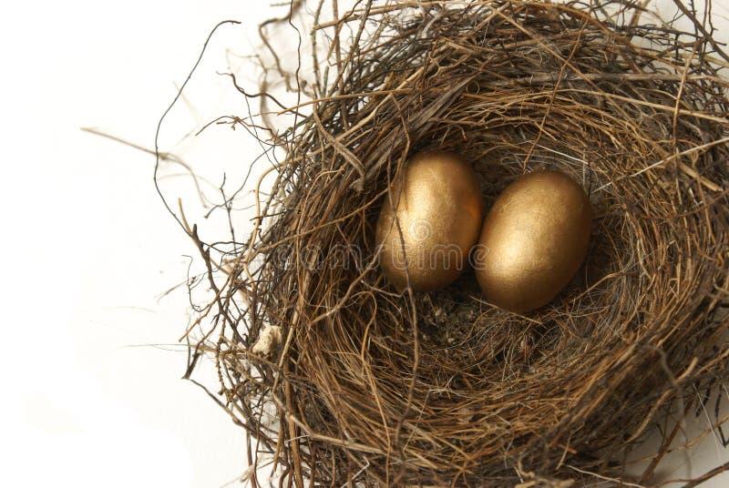 Яйц из гнезда выхода на пенсию стоковые фотографии rf