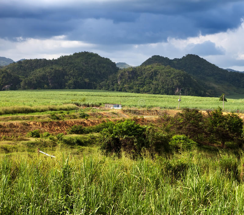 ямайка природа тропическая Долина Нассау стоковое изображение