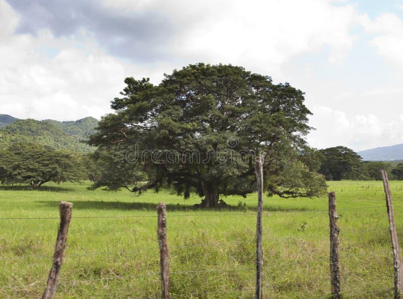 ямайка природа тропическая Долина Нассау стоковая фотография rf