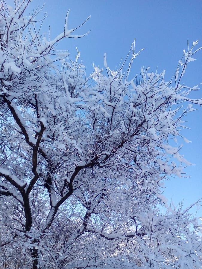 Январь 2018, деревья внутри к снегу к солнечное утро стоковое изображение