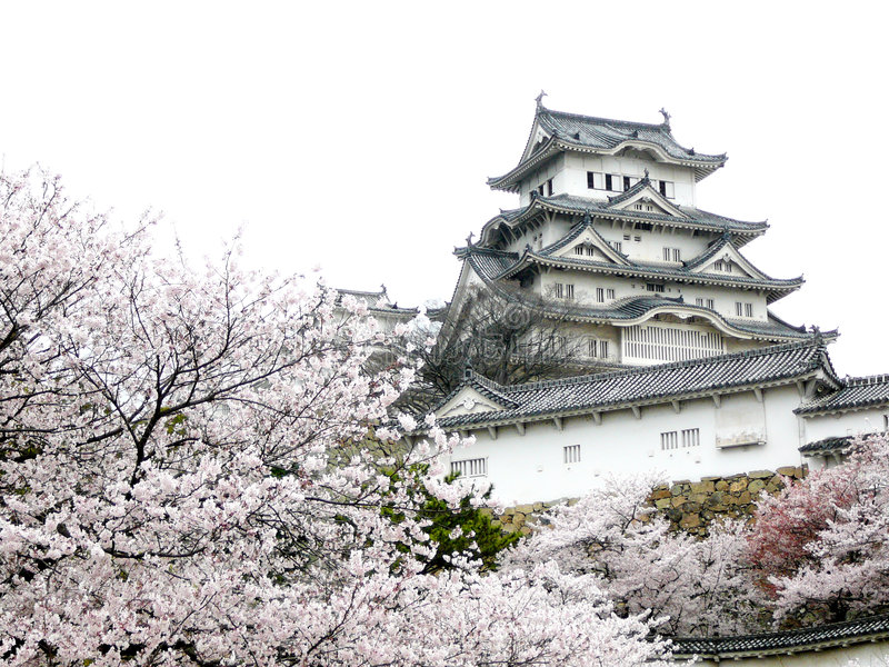японец вишни замока цветения стоковая фотография rf