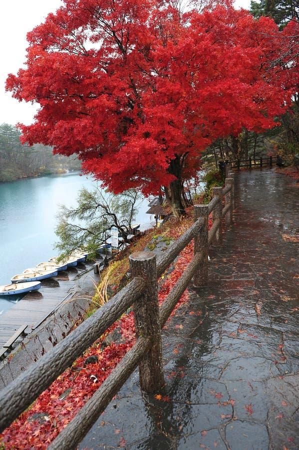 япония выходит красный цвет стоковое фото