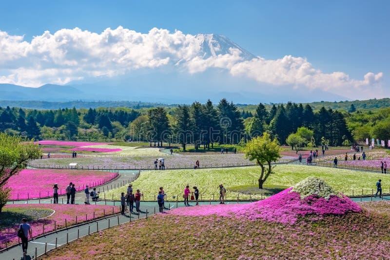 Япония - 19,2017 -го май: Туристы наслаждаются визированиями фестиваля shibazakura стоковое изображение rf
