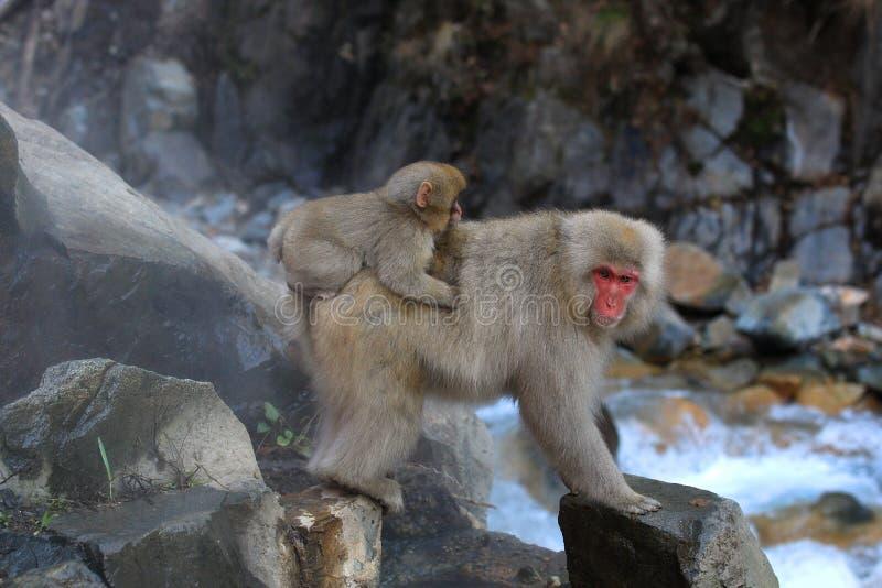 Японская обезьяна снега с младенцем стоковые фотографии rf