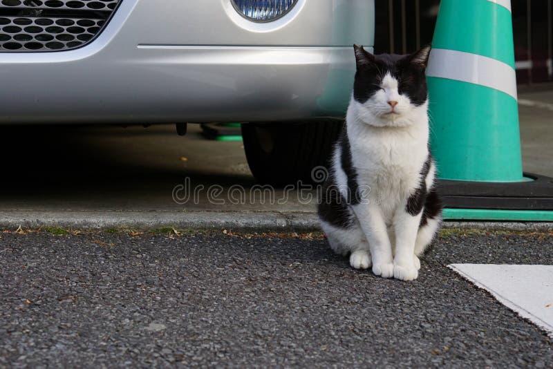 Японский кот стоковые изображения